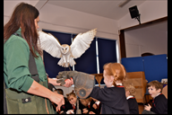 Snowy the barn owl flies in to greet pupils when S