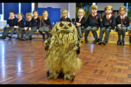 Archie the Bengal Eagle Owl from Stockley Park Bir