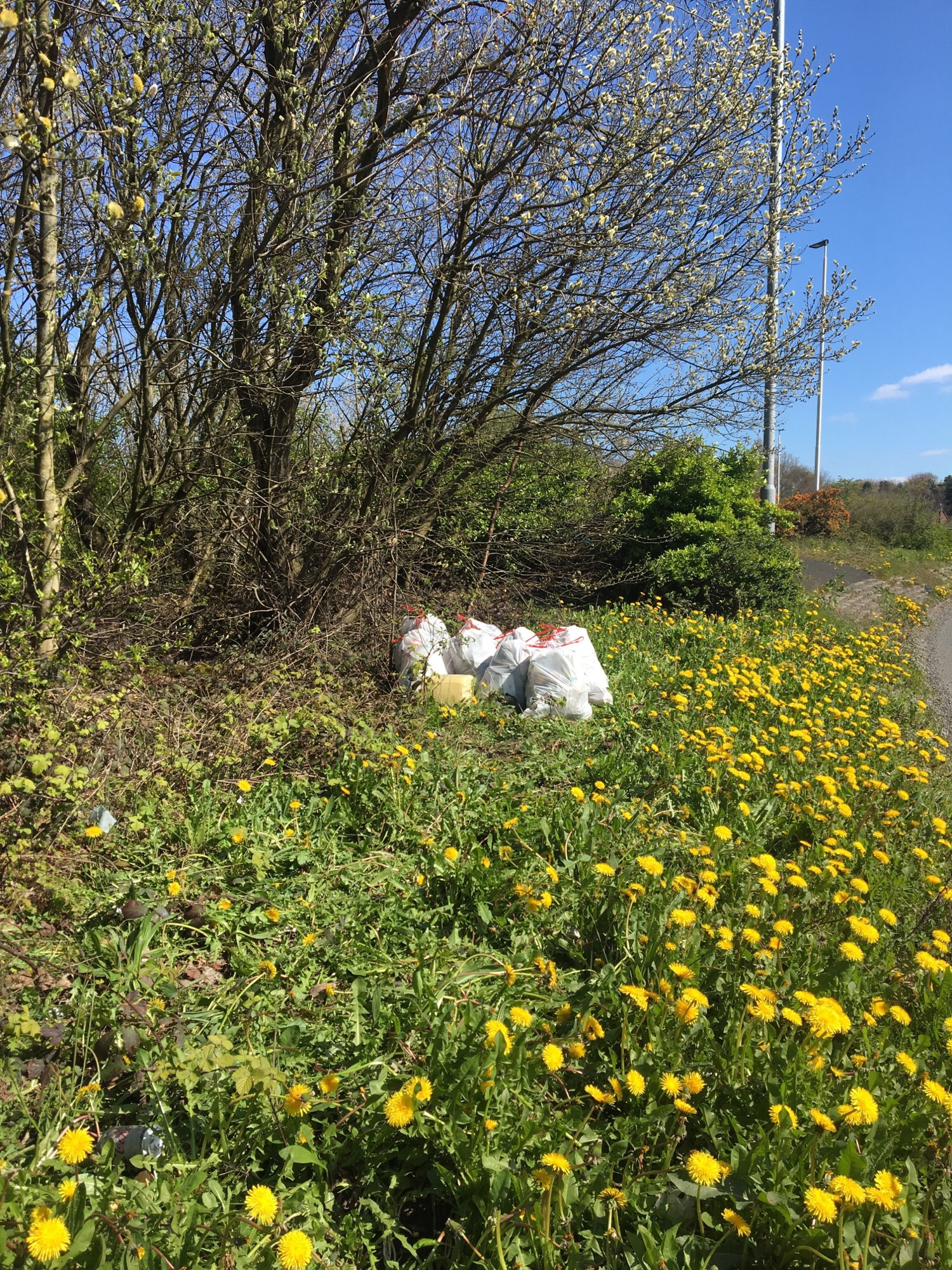 What a load of rubbish! Resident collects nine bin bags of discarded items after council refutes litter claims