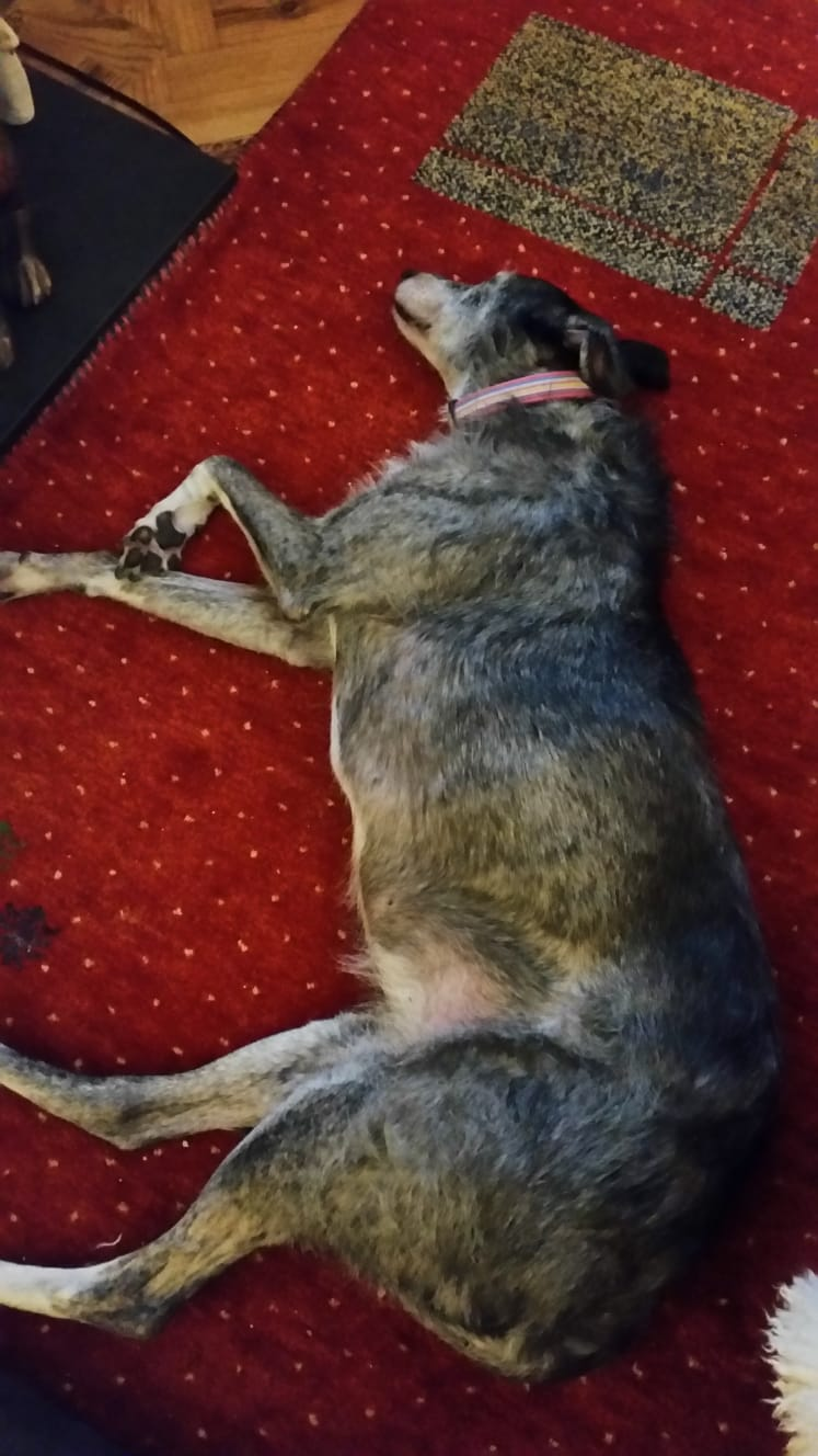 Doris, the rescue dog, lands on her paws... thanks to the Champion