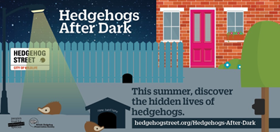 Would you like to become a 'Hedgehog Champion' and see what your prickly friends get up to 'After Dark?'