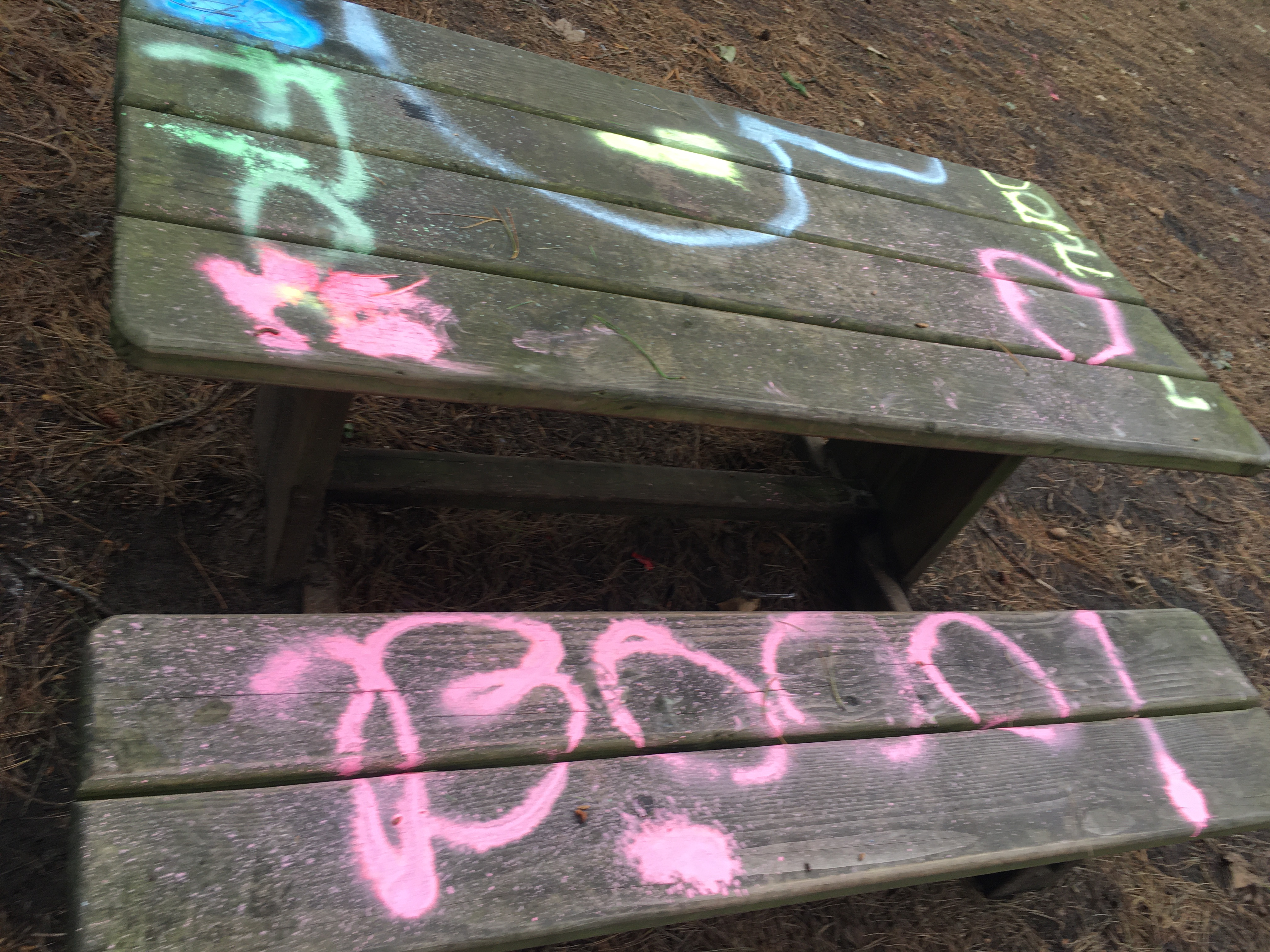 Graffiti yobs deface trees and benches
