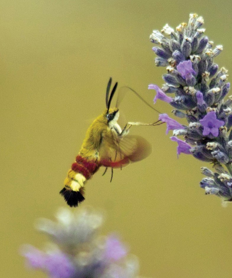 Would you like to become an 'insect champion?'