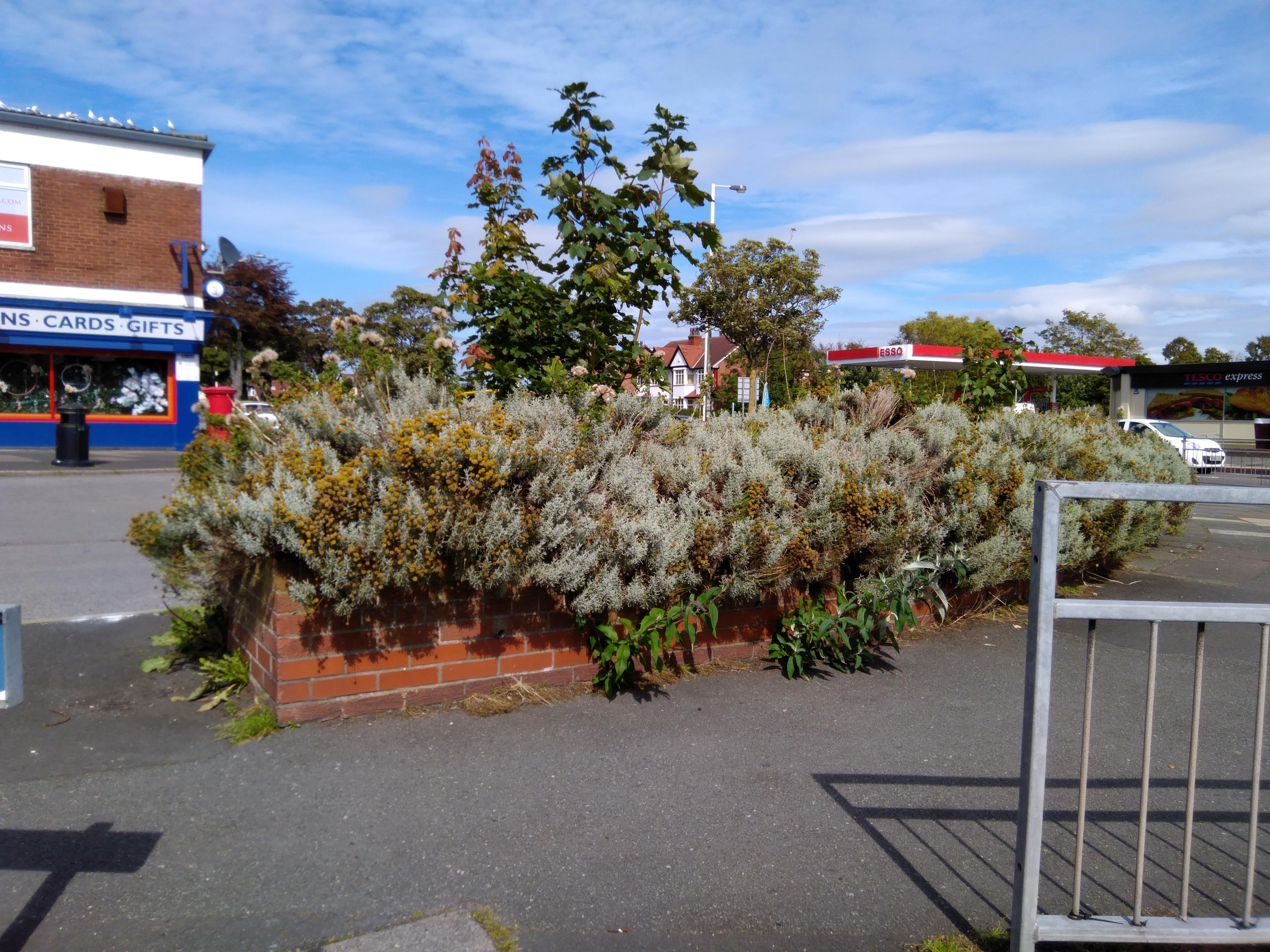 Accidentally 'unadopted'' planter is set to be neatened up by Sefton Council after becoming an 'eyesore and a grot spot'