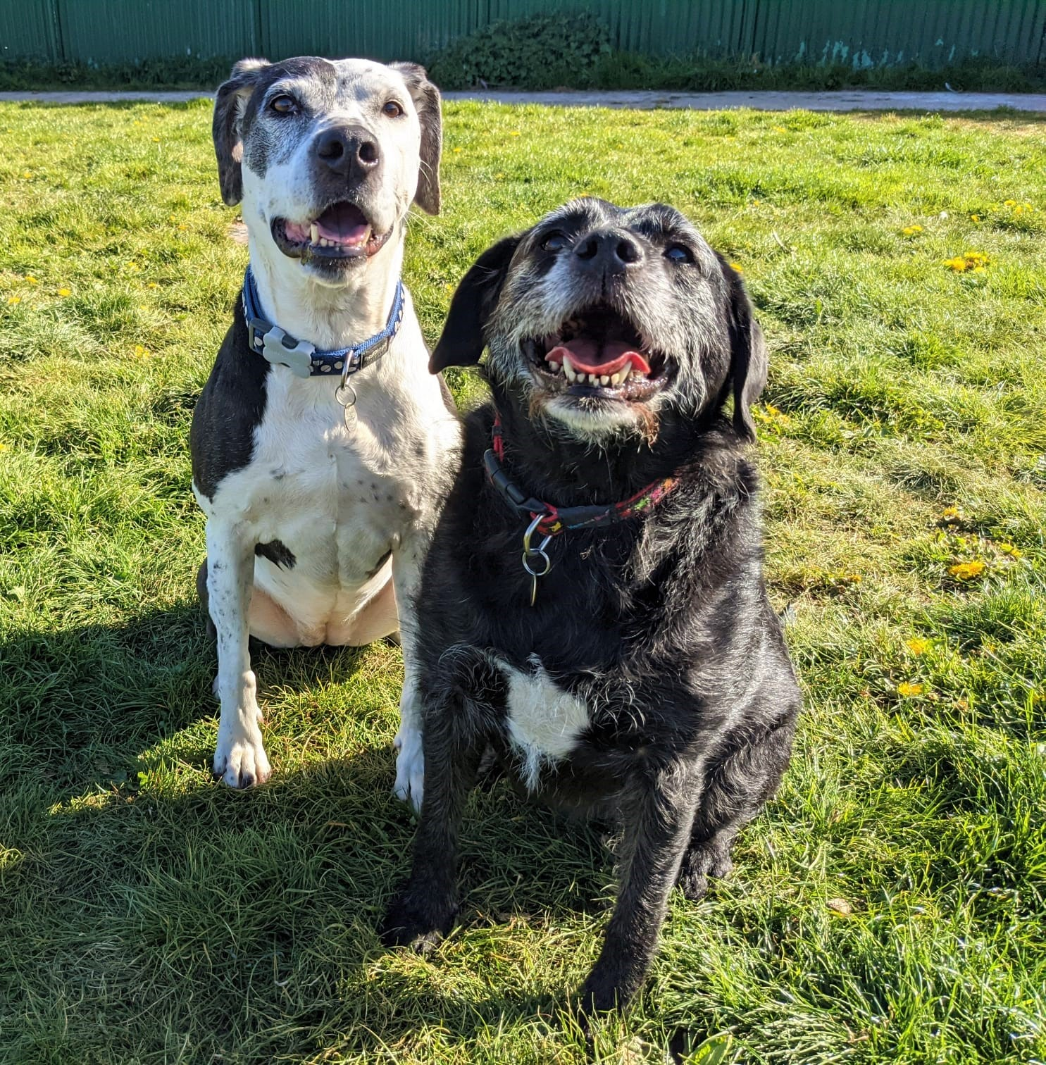 Best doggy pals in search of new home together?