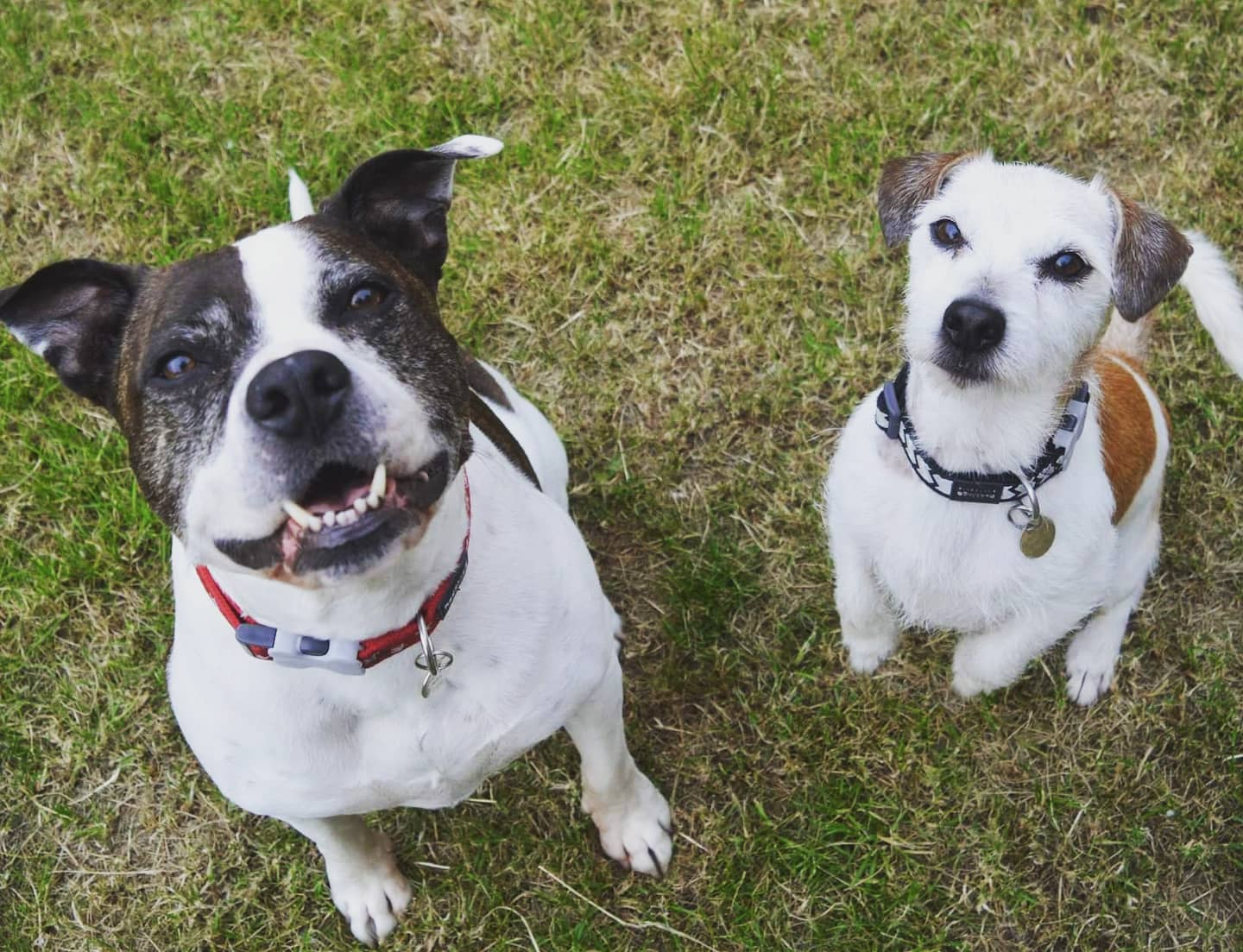 Doggie duos find new homes