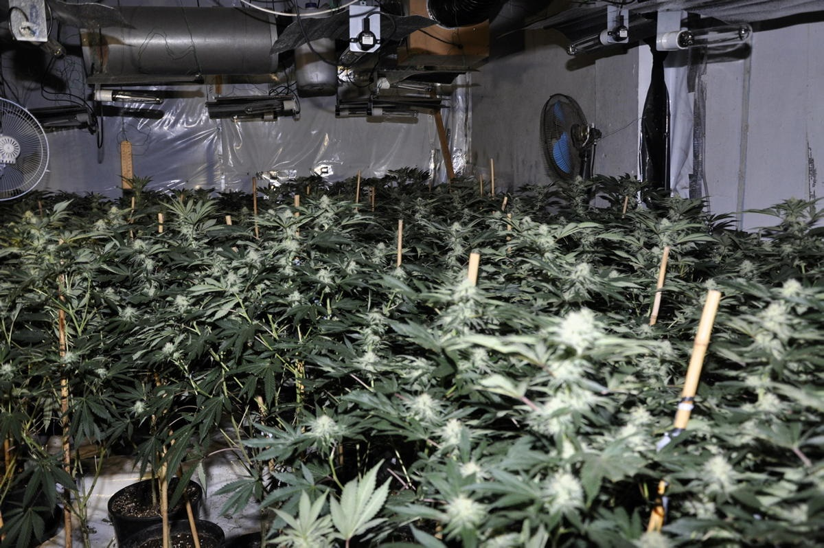 Cannabis farm worth up to £4m found in Waterloo