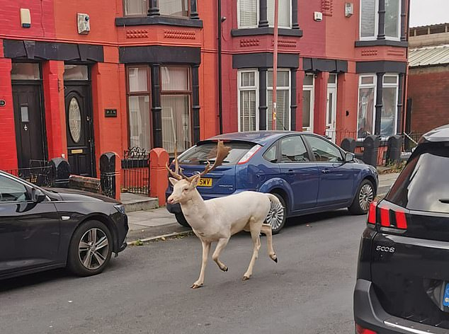 White stag shot dead by police