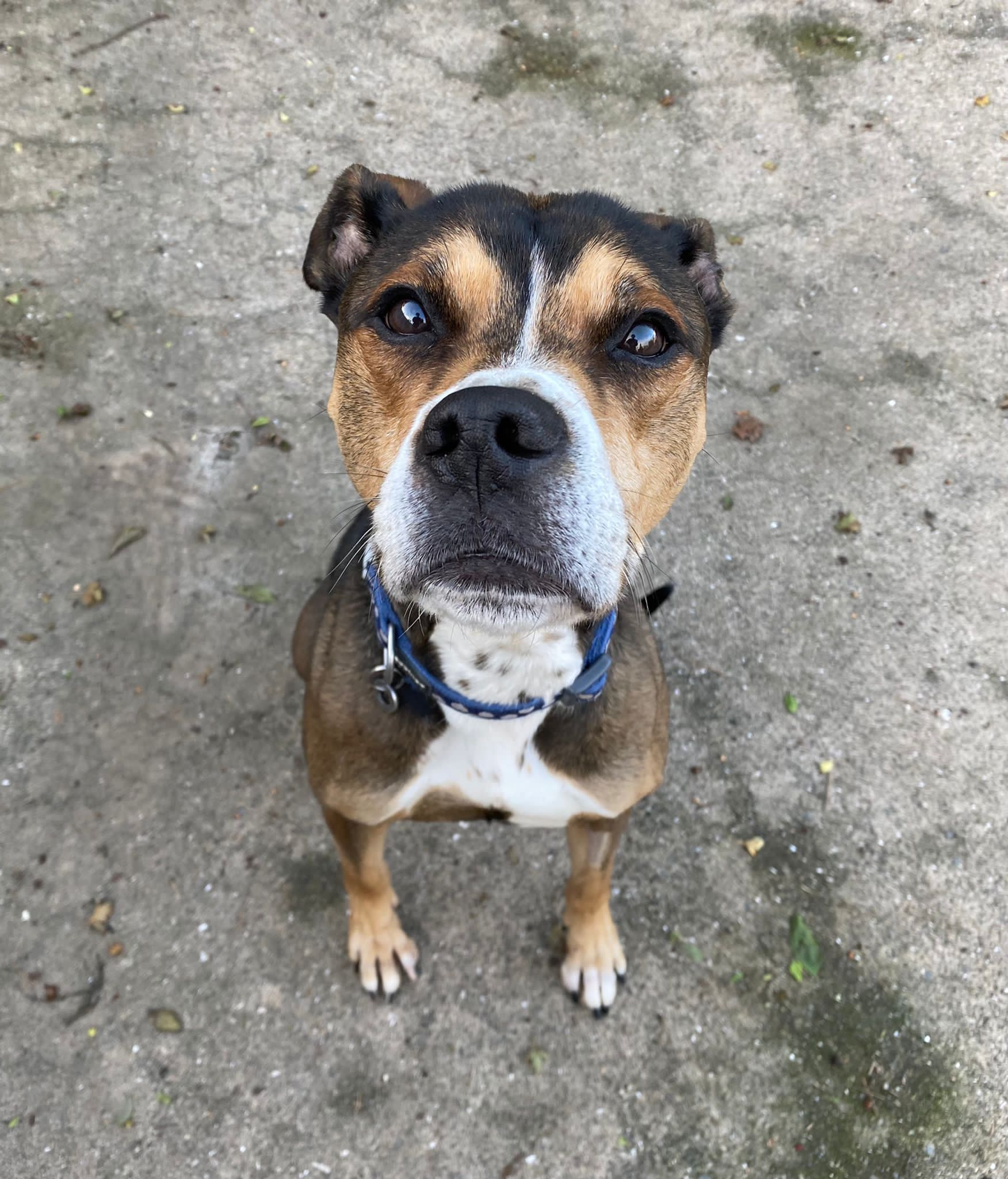 Animal rescue centre desperate to find a home for 'lonely Barney'