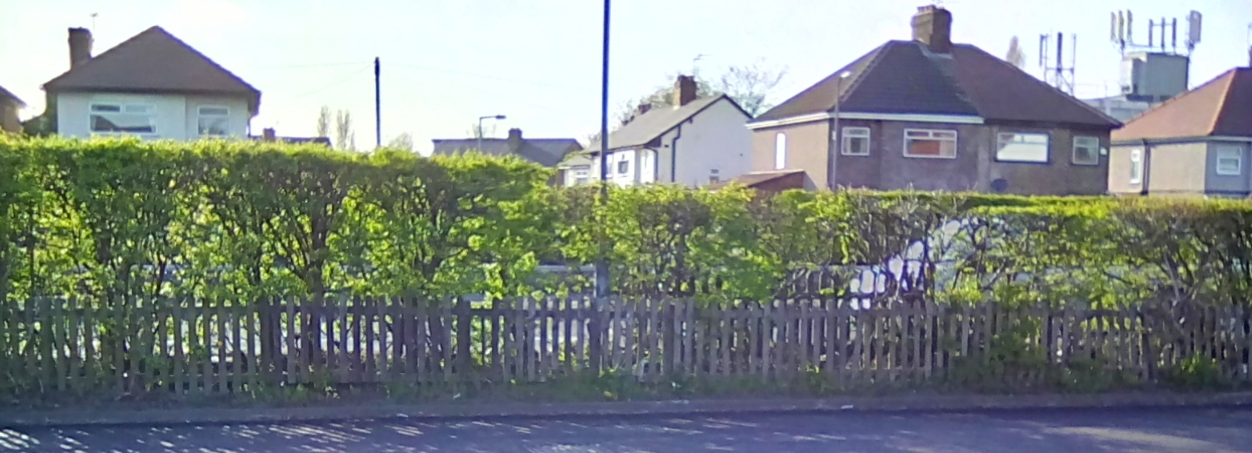 Resident is appalled after hedgerow is cut 'so unevenly'