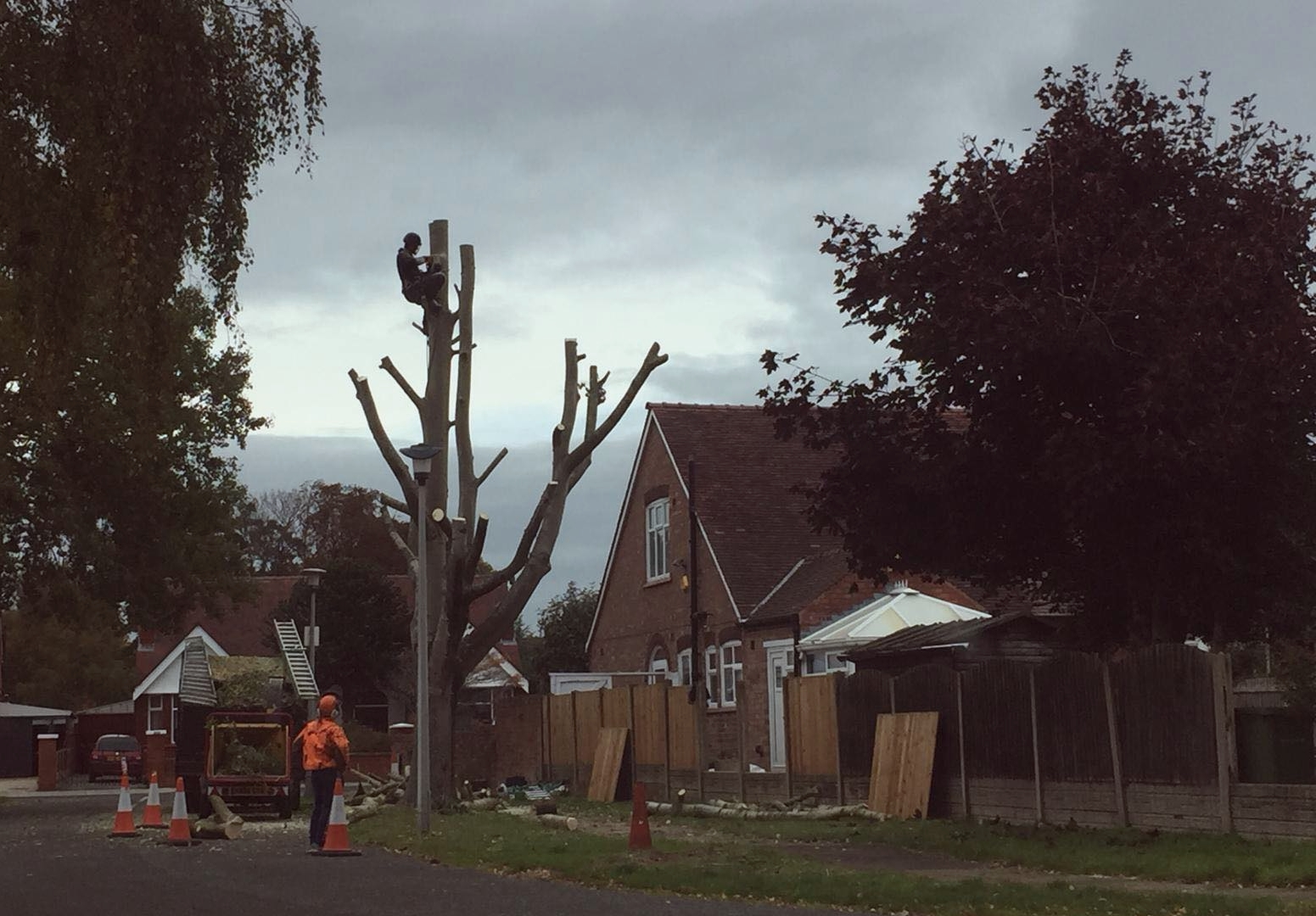 Popular trees given stay of execution after council chief steps in at last minute
